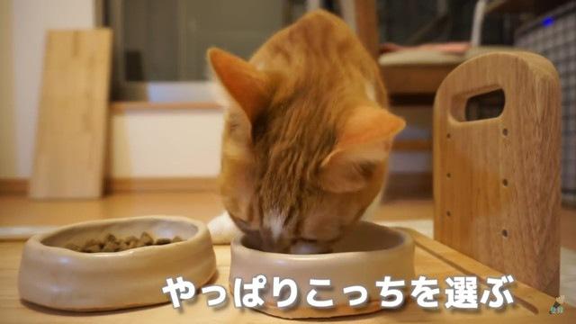 やっぱりお高いごはんを食べる猫