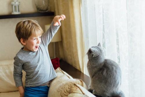 手を上げる子供と猫