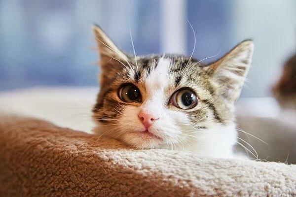 猫落ち着き