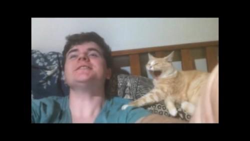 再びあくびをする猫
