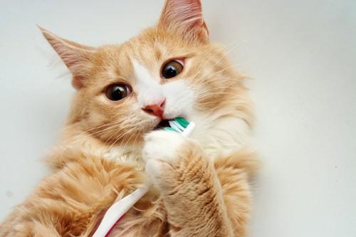 歯磨き中の猫