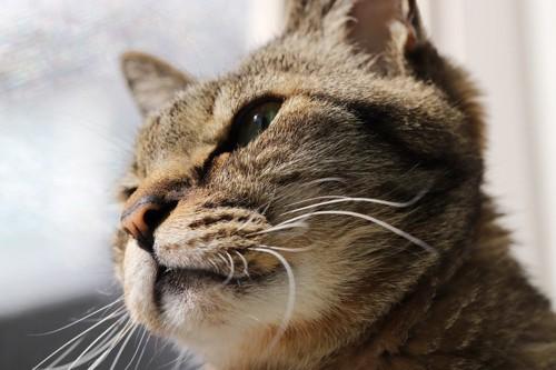 猫の斜め下からの顏のアップ