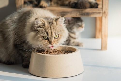 大きなお皿に入ったフードと猫