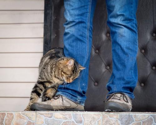 人の足に体を擦り付ける猫