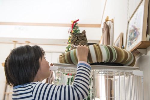 猫の歯磨きをしようとする少女