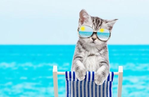 サングラスの浜辺の猫