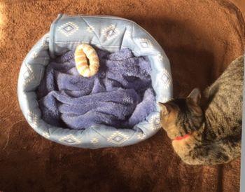 猫がベッドの右側にいる