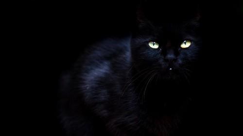 暗闇の黒猫