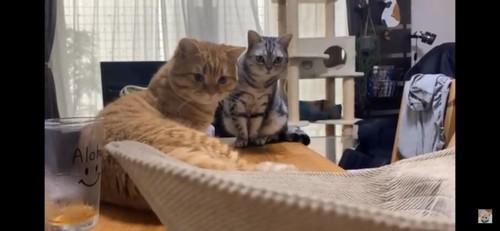 帽子を見つめる猫