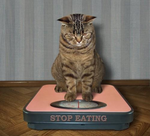 体重計に乗っている猫