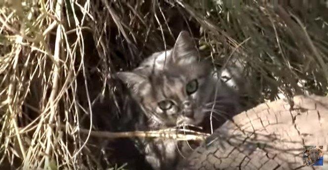やぶに隠れる猫