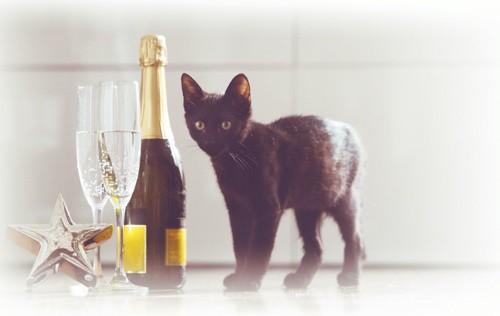 シャンパンのボトルとグラスと黒猫