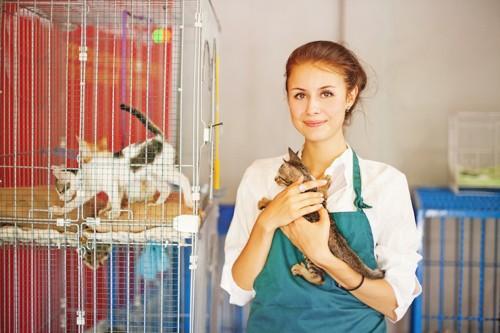 ショップ店員に抱かれた子猫とケージに入った子猫たち