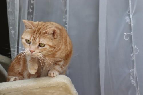 キャットタワーの上で片手をあげる猫