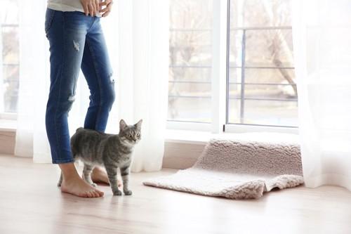 部屋で立っている女性の足の間にいる猫