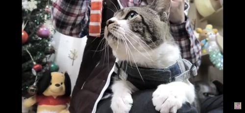 紐のにおいを嗅ぐ猫