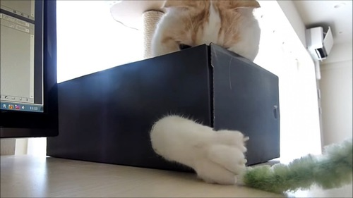 箱から顔を少し出す猫