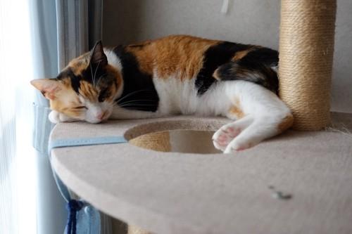 キャットタワーの上で眠っている猫