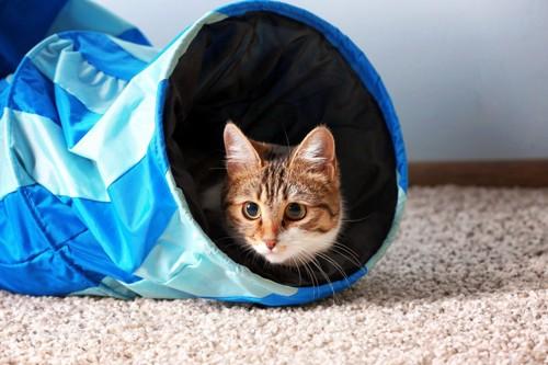 青いトンネルから顔を出す猫