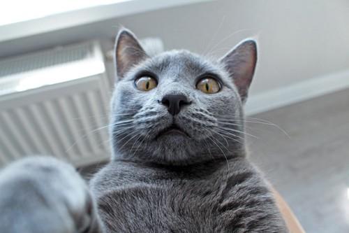 猫顔アップ