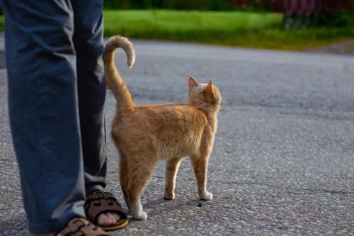 足に尻尾をつける猫