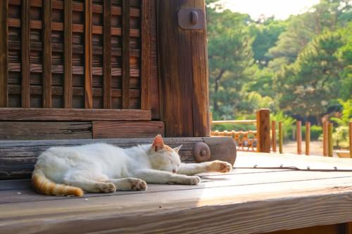 横向きで眠る猫