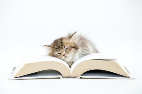 開いた本の上で眠っている子猫