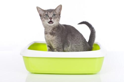 トイレの中で鳴く子猫