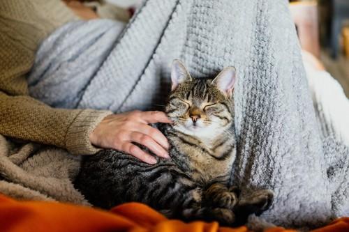 人のそばで甘える猫