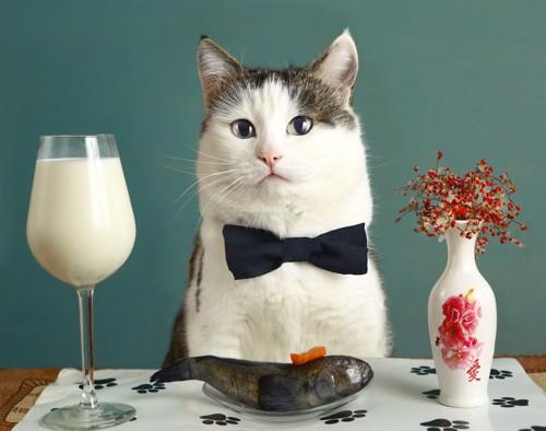 レストランにて魚を食べる猫