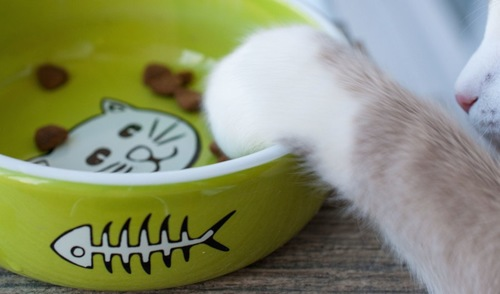 ご飯の器に手をかける猫
