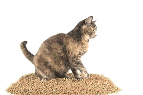 ペレットの山の上に乗る猫