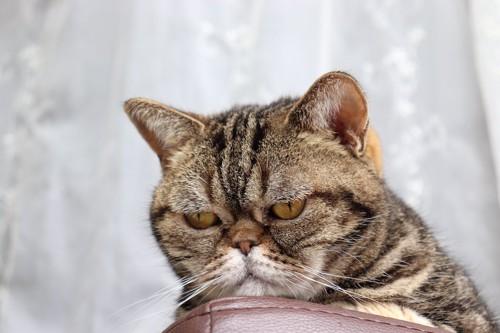 何かをジッと見つめる猫