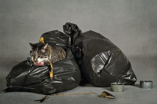 ゴミ袋を破る猫