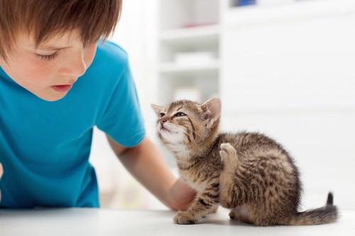 後ろ足をあげた子猫を撫でる男の子