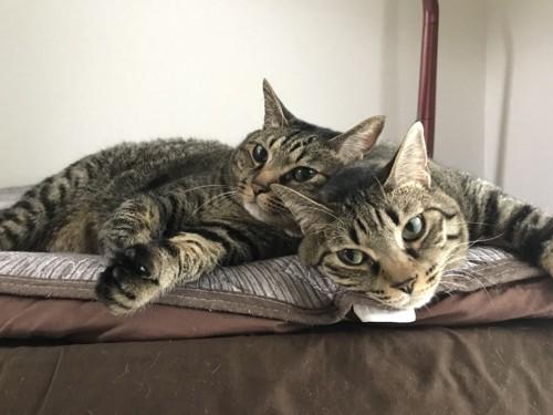 ニコイチの兄妹猫