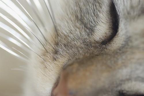 猫の髭アップ
