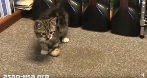 足を怪我した子猫