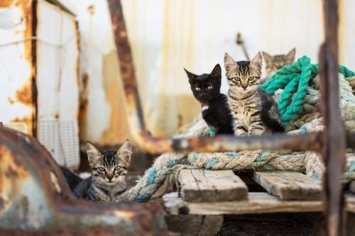 こちらを見る猫たち