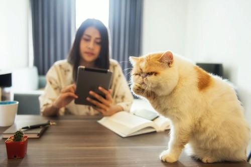 タブレットを見る女性とテーブルの上で毛繕いをする猫