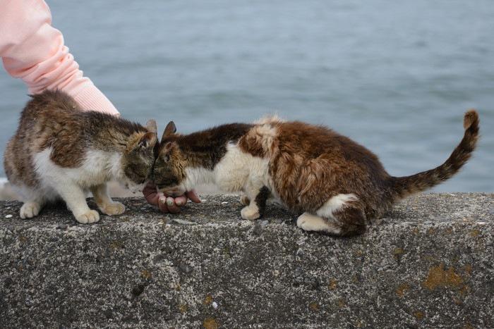 島猫にエサをあげている写真