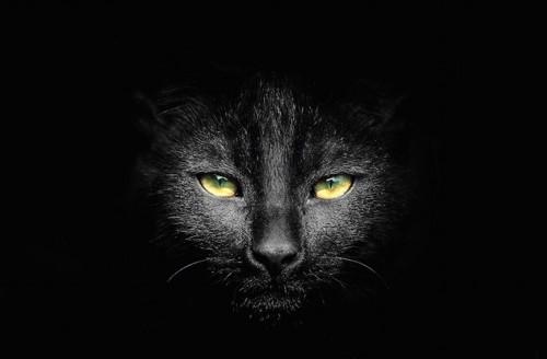 暗闇の中で見つめる黒猫