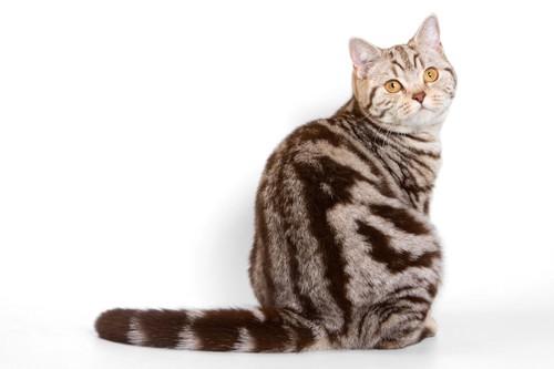 座ってこちらを振り返る猫