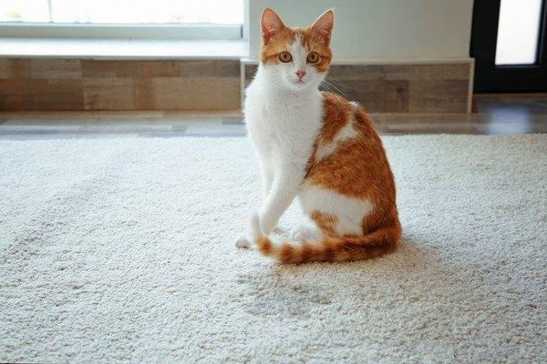 ドアの前にいる茶白の猫