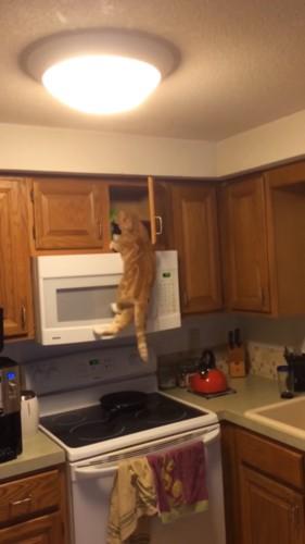 おやつをくわえる猫
