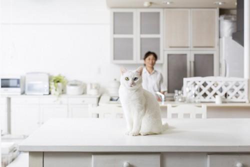 台所にいる猫と人間