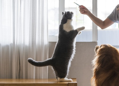 猫に芸を教えようとする人