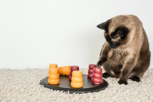 フードパズルに手を伸ばす猫