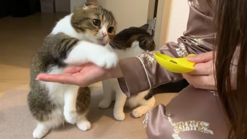 お手をする猫