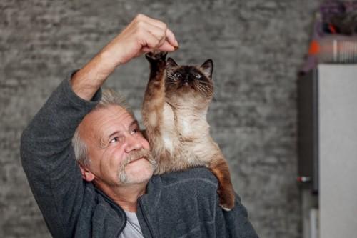 老人と遊ぶ猫
